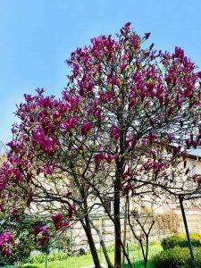 gradinita hansel und gretel sector 1 bucuresti magnoliu 225x300